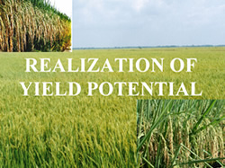 realization_of_yield_potential